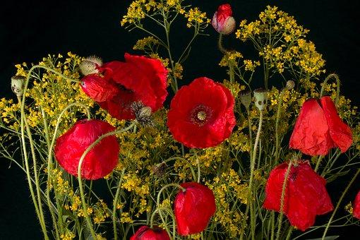 Flowers, Poppy, Poppy Flower, Red, Red Poppy