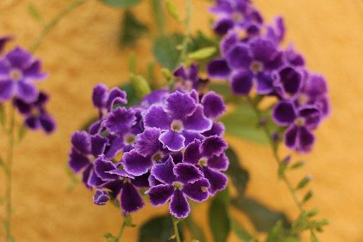 Flower, Carnivorous, Purple, Garden, Plants, Nature
