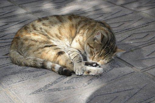 Cat, Sleepy, Sleeping, Tired, Street, Outdoor