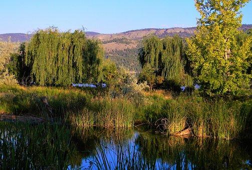 Deer, Summer, Boating, Okanagan, Summer Vacation, Water