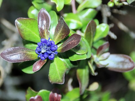 Ecuador, Flower, Exotic, Violet, Exotic Flower
