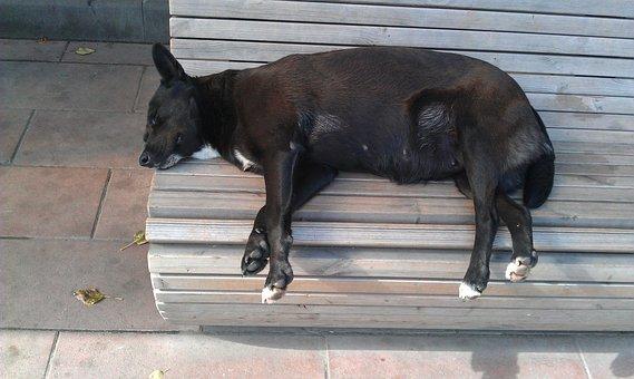 Dog, Sleep, Street, Warm, Vacation, Black, Sunny
