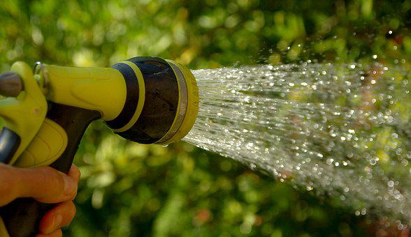Watering, Water Jet, Gardener