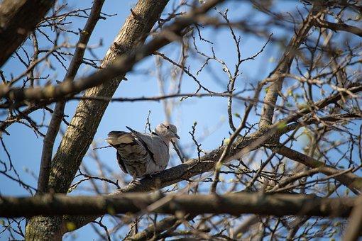 Dove, Pigeon, Bird, Animal, Animal World, Nature, Eye