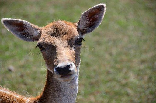 Damm Wild, Animal, Nature, Curious, Zoo, Bambi, Cute