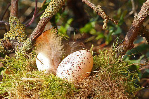 Easter Egg, Easter Nest, Easter, Egg, Easter Decoration