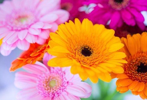 Germini, Flower, Colorful, Pink, Yellow, Purple, Vase