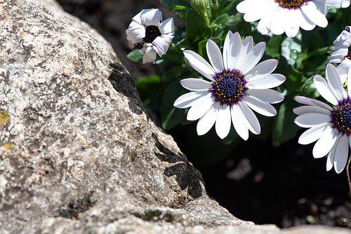 Flowers, Stone, White, Garden, In The Garden