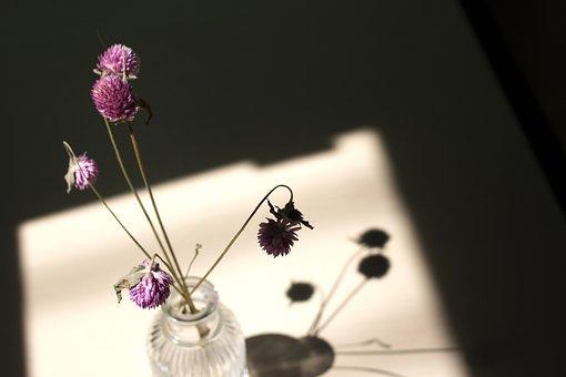 Dry Flower, Light, Shadow, Window