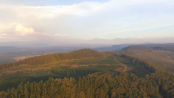 Chile, Forest, South, Mountains, Unesco, Nature, Trees