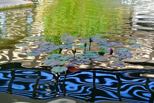 Water, Pond, Feature, Reflection, Ripple
