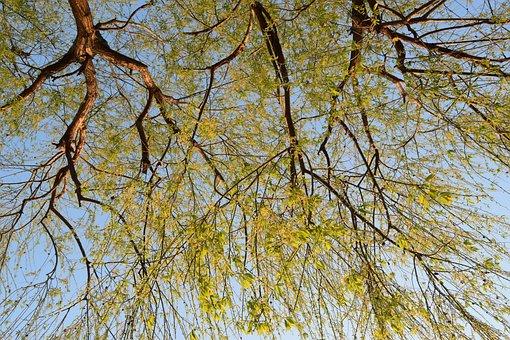 Tree, Nature, Autumn, Trees, Landscape, Sunlight
