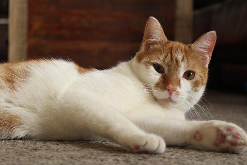 Cat, Kitten, Orange, Animal, Pet, Cute, Feline, Kitty
