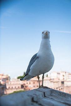 Seagull, Bird, Seevogel, Animal, Flying, Animal World