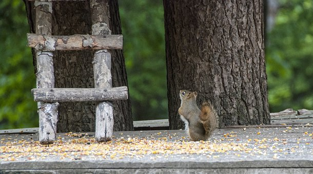 Canada, Omega Park, Fauna, Squirrel, Travel
