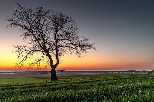 Lone Tree, Sunset, Dusk Over The Valley, Landscape