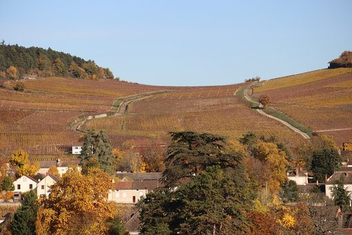 Vines, Fall, Landscape