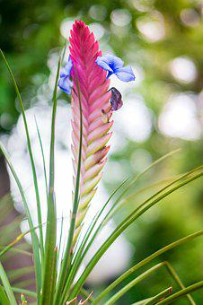 Flore, Flower, Nature, Flora, Bloom