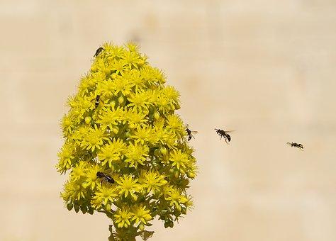 Bee, Floral, Flower, Spring, Honey, Garden, Nature