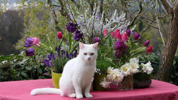 White Cat, Flower Arrangement, Bluumendekoration