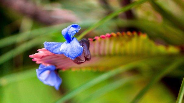 Flore, Bedding Plant, Garden Plant, Ornamental Plant
