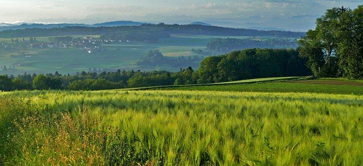 Landscape, Switzerland, Zurich, Hasenberg, Cereals