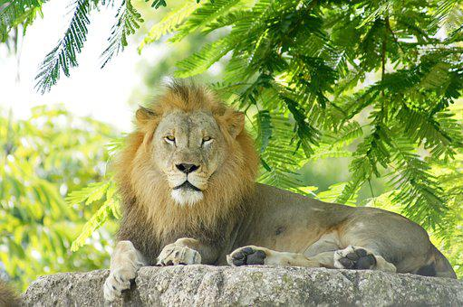Lion, Male, Mane, Portrait, King, Strength, Predator