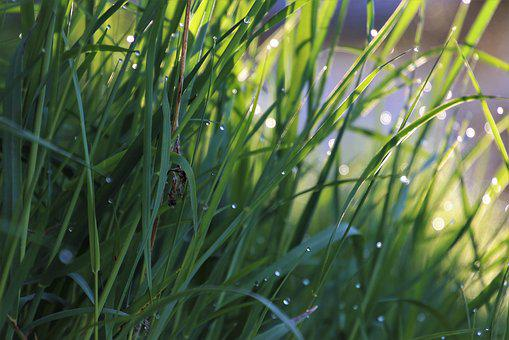 Grass, Wet, Dawn, Lit, Meadow, Morgentau, Bokeh