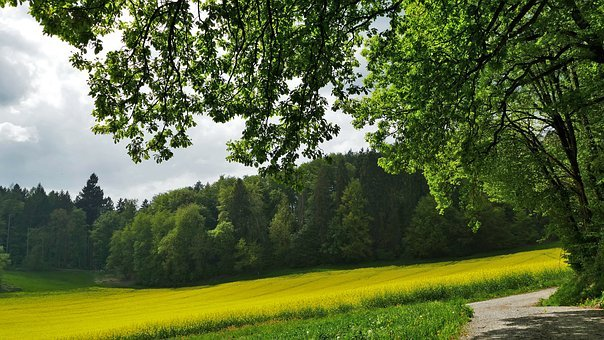 Landscape, Nature, Forest, Trees, Meadow