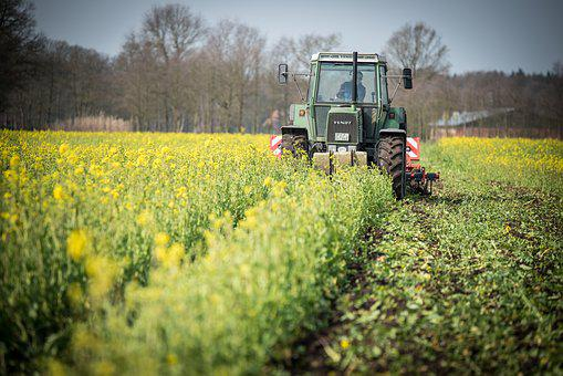 Catch Crop, Tractor, Field, Grub Bern, Agriculture