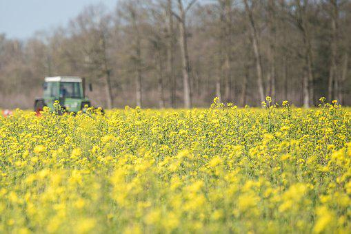 Field, Tractors, Spring, Tractor, Agriculture, Arable