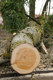 Tree, Trunk, Uprooted, Nature, Wood, Bark, Leaves
