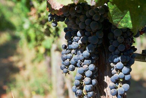 Wine, Grapes, Vineyard, Vine, Fruit, Winegrowing