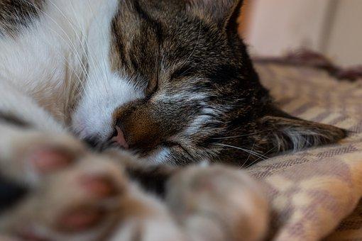 Cat, Kitten, Pet, Animal, Cute, Eyes, Kitty, Adorable