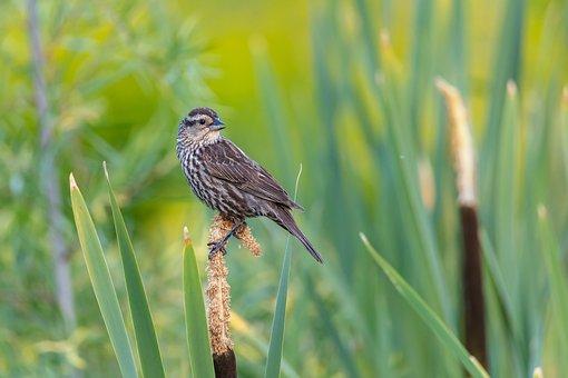 Nature, Wildlife, Animal, Bird, Small, Wilderness