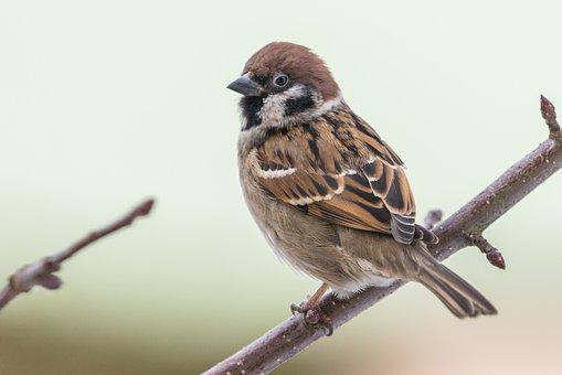 Bird, The Garden, Animal, Sparrow, Nature