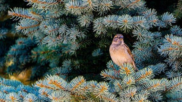Sparrow, Birds, Nature, Animal, Plumage, Feather, Tree