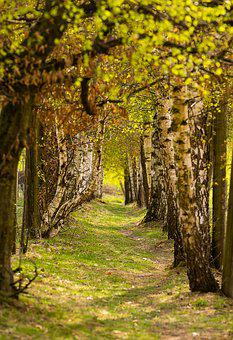 Nature, Trees, Away, Avenue, Landscape, Spring