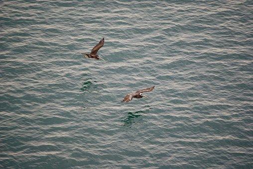 Birds, Sea, Ocean, Nature, Water, Seagull, Animal