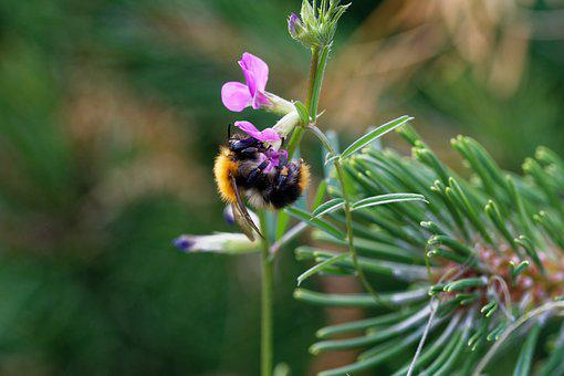 Bee, Blossom, Bloom, Insect, Pollen, Nature, Spring