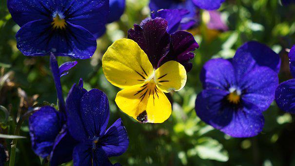 Flower, Garden, Bloom, Plant, Blossom, Spring, Nature