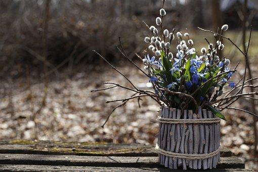 Scilla, Bouquet, Blue, Bloom, Asparagus, Flower, Spring