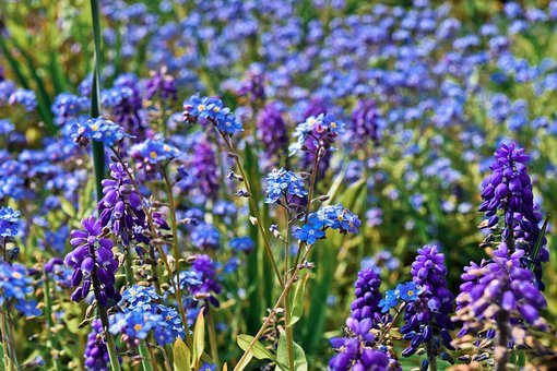 Flowers, Bluebell, Spring, Blue, Butterfly Orchid