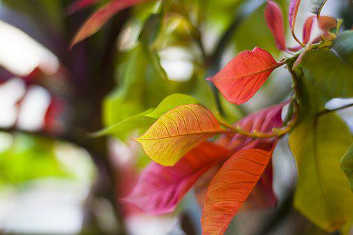 Plant, Leaves, Colored Leaves, Indoor Plant, Bright