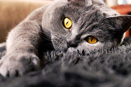 Cat, Eyes, Animal, Kitten