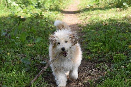 Dog, Dog Running With Stick, Dog Cross, Dog Long Hair
