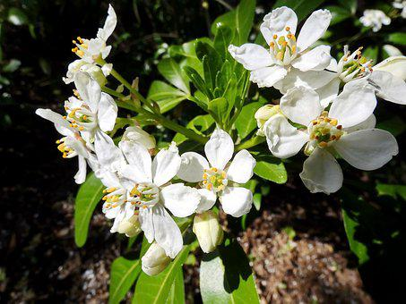 White Flowers, Bouquet, Spring, Flowering, White