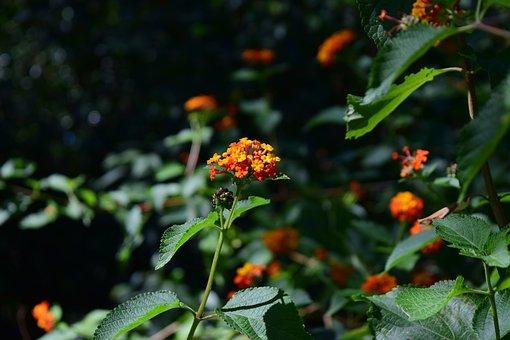Plant, Flower, Flowers, Spring, Garden, Petals, Botany