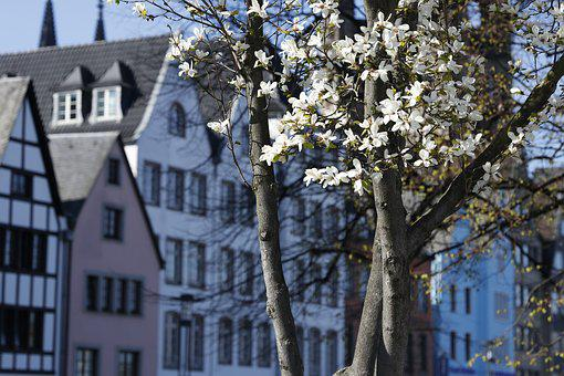 Street, Cologne, Bloom, Germany, Building, Old Town