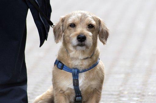 Dog, Pet, Animal, Mascota, Perro, Hund, Hunde, Portrait